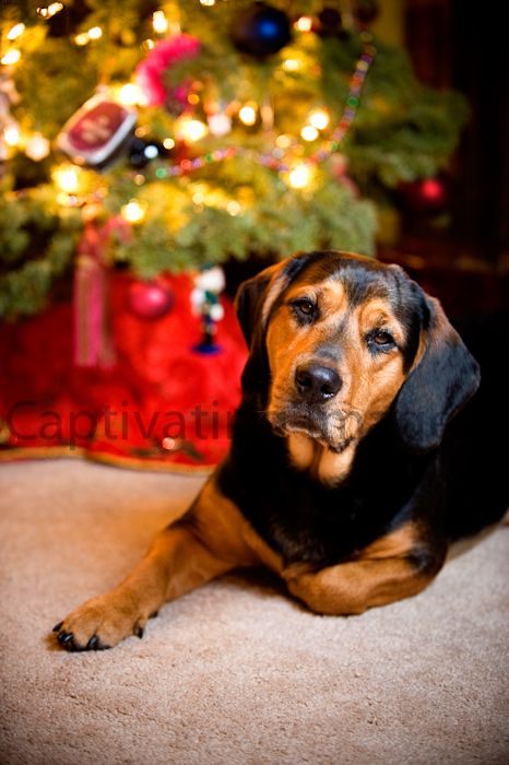 Dog by the Christmas tree